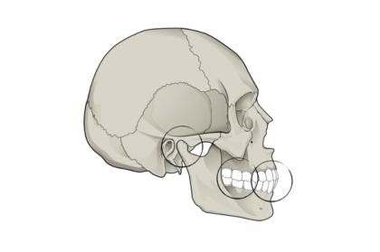Reabilitação oral: Oclusão aplicada à reabilitação oral (2º módulo, streaming)